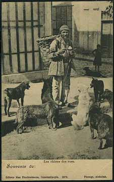 Dogs of Istanbul; postcard published by Max Fruchtermann